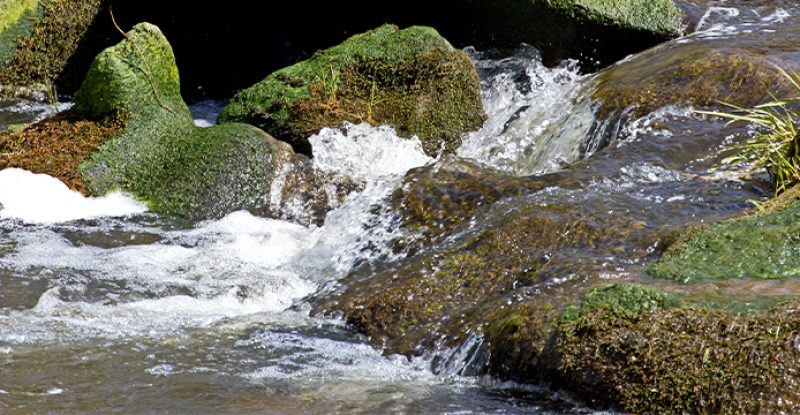 Lessons From a Mountain Stream
